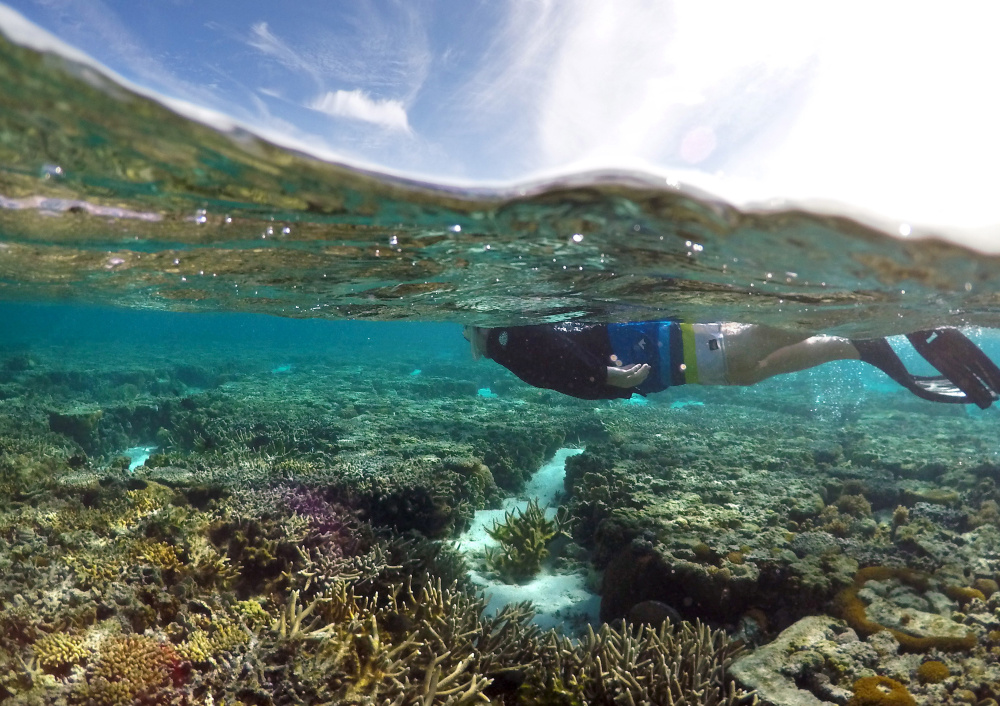 A tourist snorkels above coral in the lagoon on Lady Elliot Island in Queensland, Australia, in June. A study released Tuesday shows that sunscreen is killing coral and reefs around the globe.
