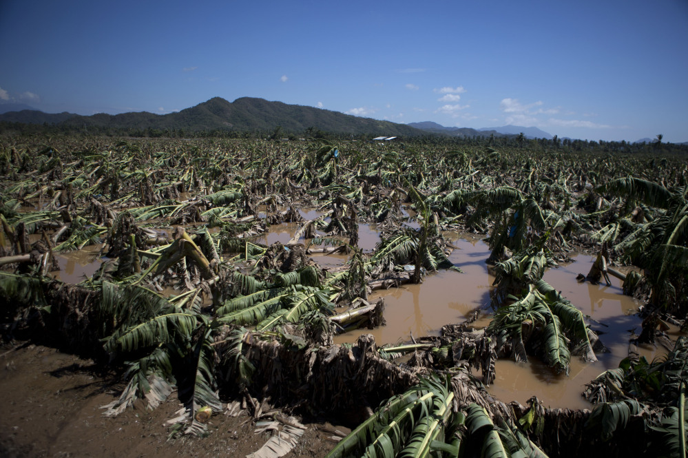 Banana trees lie toppled in mud and floodwaters at a devastated banana plantation outside Cihuatlan, Jalisco state, Mexico, on Sunday.