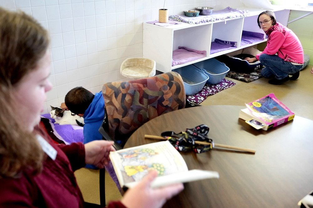 """As Fiona Shea reads her book """"D.W. Thinks Big"""" out loud, Jacob Lessard, center, and Fiona Shea, top right, listen and pet cats in  the multi-cat room at the Animal Refuge League of Greater Portland."""