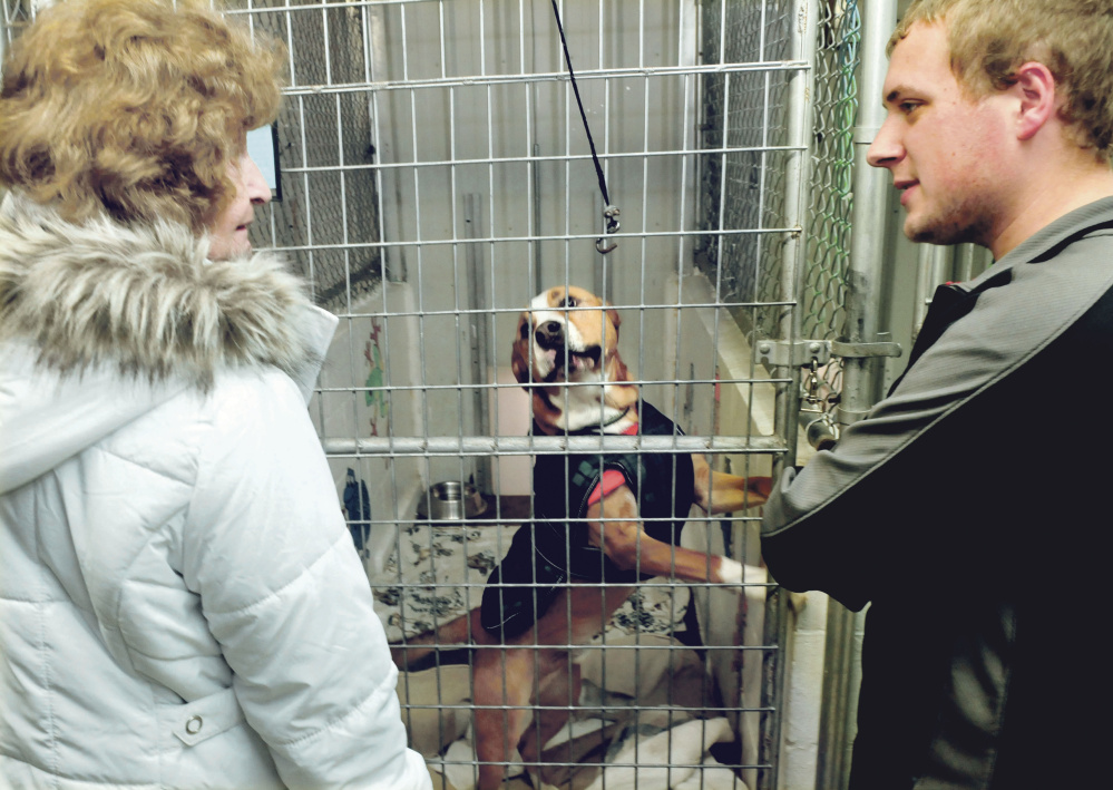Xenia Elin speaks with Somerset Humane Society employee Kyle Woodbury about the dog she is considering adopting at the Skowhegan shelter on Tuesday.