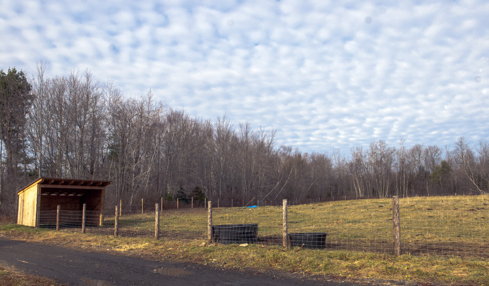 The pasture where Daria Goggins' pet Holsteins lived for 10 years was empty Saturday. She found the pair shot dead Friday afternoon.