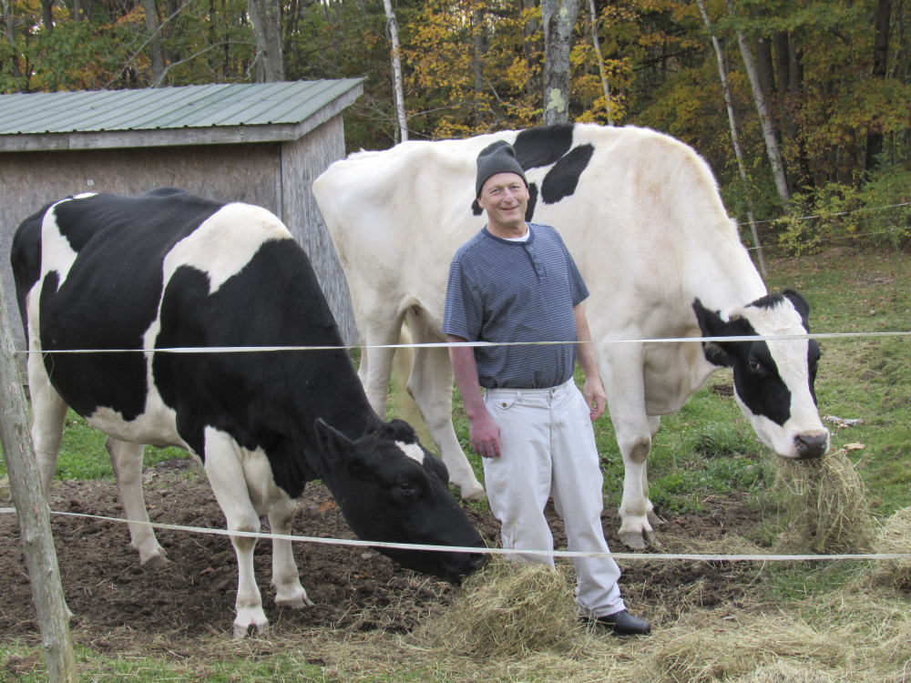 Mark Goggins stands with Isadora and Theodore, pet Holsteins owned by Daria Goggins of Richmond, recently. The animals, which their owner said were the largest Holsteins in Maine, were shot and killed Friday.