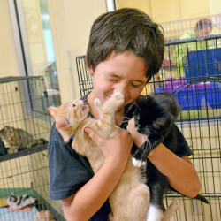 Dias Greene, 12, of Fairfield, cuttles three kittens available for adoption at the Humane Society Waterville Area animal shelter on Webb Road on Friday. As a Black Friday special, all black cates were free at the shelter.