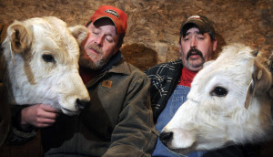 Troy Chase, left, and Peter Poland with two of the three bulls Chase bought in Kentucky, Bo, left, and Luke, at Chase's farm in Pittston on Monday. Chase Poland and the bull calves survived a crash in New Jersey on Sunday that claimed the lives of three people.