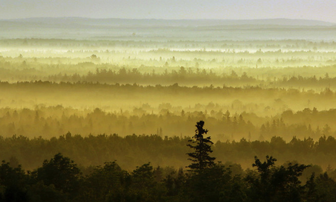 The woods are backlit by the morning sun near Patten. Supporters of the North Woods national monument, composed of land largely donated by conservationist Roxanne Quimby, say it will draw tourists to an economically challenged part of the state. Opponents of the monument had argued it would interfere with snowmobiling and hunting, and could squelch business development.