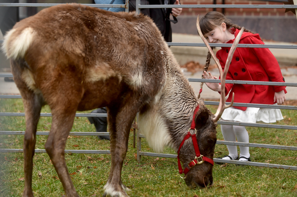 Kelly Noe, 7, of Norridgewock, greets reindeer on display Saturday at Castonguay Square during the Downtown Waterville Open House.