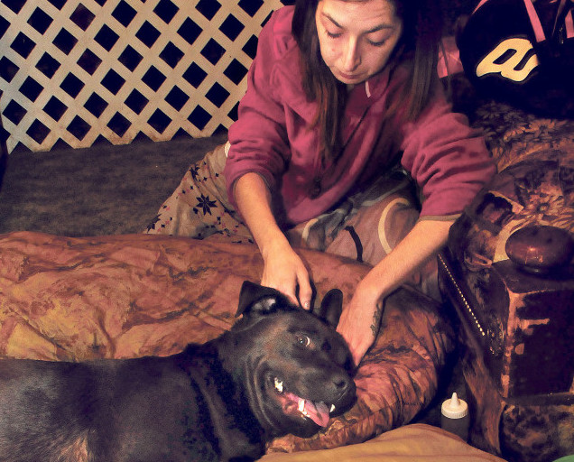 Becky Nutter comforts her seriously injured dog, Diesel, on Tuesday. Diesel was hit by a car on Monday on Middle Road in Sidney. An outpouring of donations Wednesday helped pay for surgery for Diesel Wednesday and the family hopes he'll be home for Christmas.