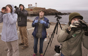 Young birds of a feather look skyward at Nubble Light. That's Fyn Kynd, 15, right, of Searsmont; Sebastian Benedetto, 12 center, of York; and Grace Evans, 13, left, of Old Orchard Beach along with Maine Audubon naturalist Doug Hitchcox.