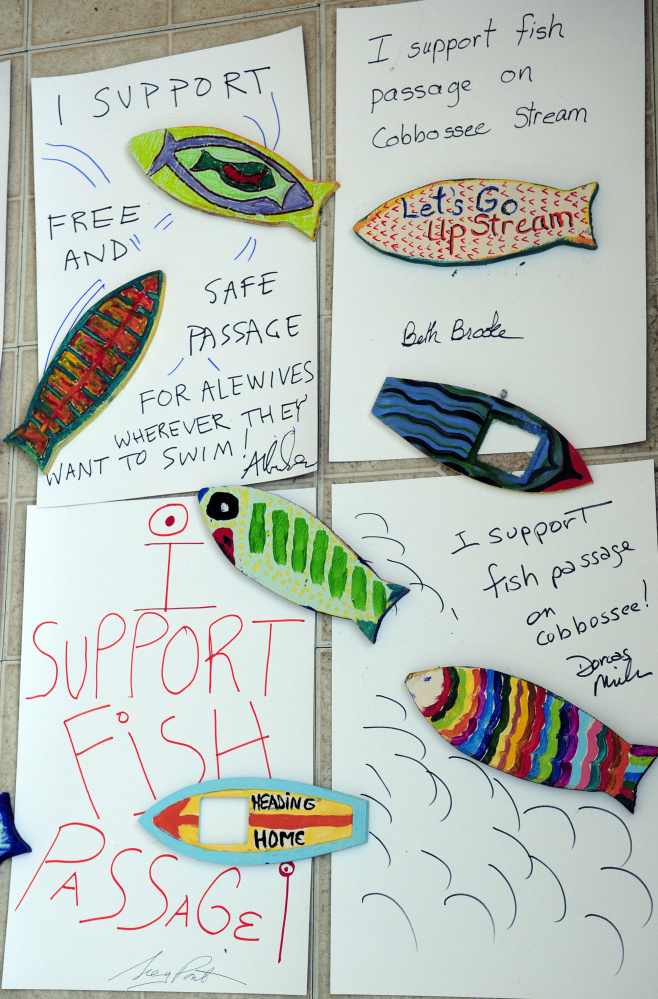 Colorful fish that are part of the alewife restoration project in Gardiner.