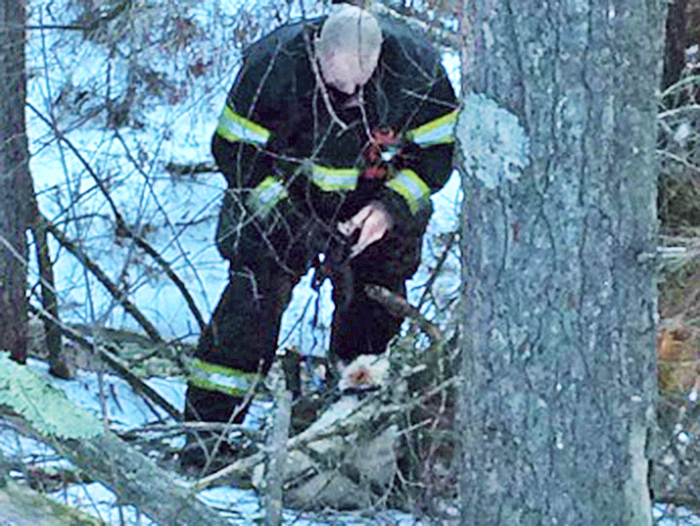 An Orange, Mass.,  firefighter approaches a dog entangled in the woods in this photo furnished by the Orange Police Department.