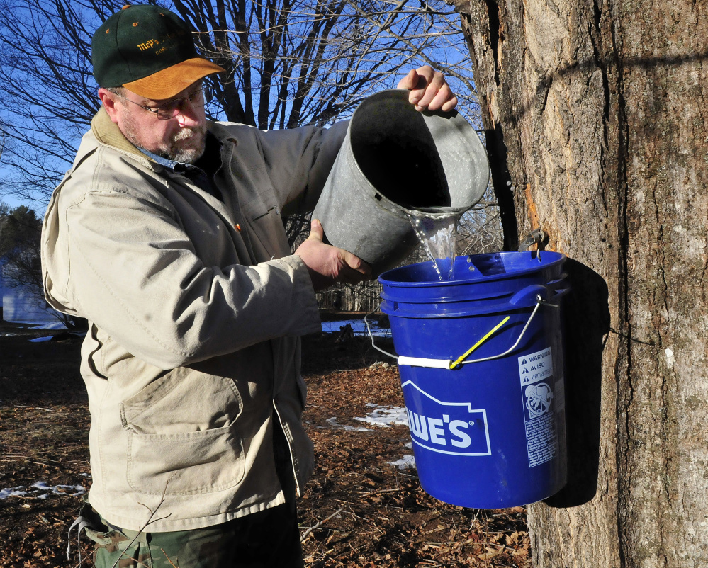 Bruce Torrey pours maple sap from a full bucket into another bucket early Tuesday at his home in Troy. Torrey said the sap has run steadily on the warm days since he began tapping trees last weekend. Also, area roads have been posted with weight limit restrictions — something that normally happens in the spring — because of the recent unusually warm weather.