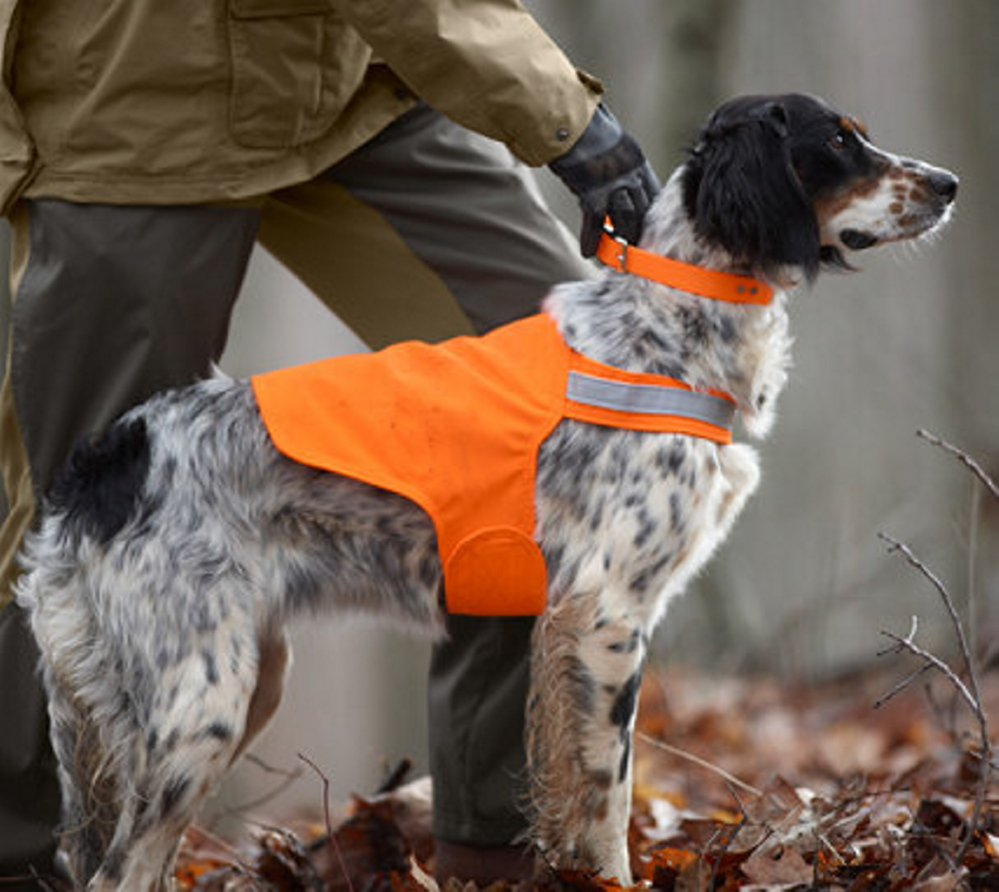 Tick Repelling Safety Dog Vests made by Dog Not Gone Visibility Vests in Skowhegan will be sold on a test basis at Walmart beginning next month.