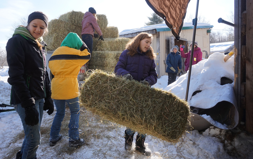 Contributed photo Hannah Neal and Natalee House help other members of Giddy-Up & Go 4-H Horse Club unload hay at Double B Equine Rescue during the 2015 Hay Raiser.