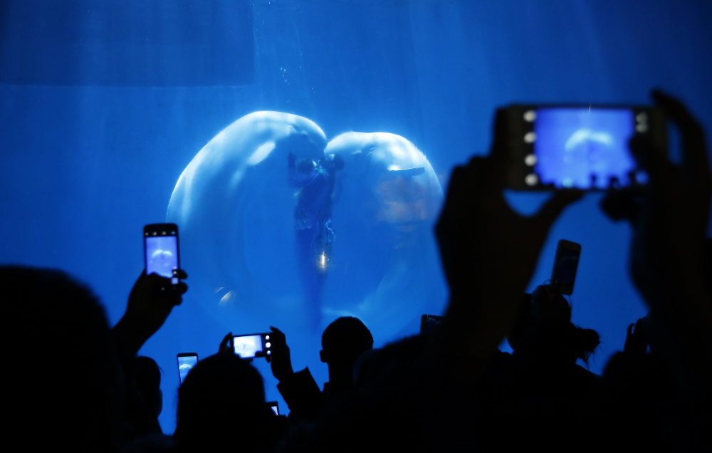 """Visitors take pictures while Beluga whales and their trainers present """"The heart of Ocean"""" show at the Harbin Polarland in the northern city of Harbin, Heilongjiang province January 6, 2015. The polar land themed park combining animal shows and  polar land sights has had increased visitors during the annual Harbin International Ice and Snow Festival, the park said.   REUTERS/Kim Kyung-Hoon (CHINA - Tags: ANNIVERSARY SOCIETY TRAVEL) - RTR4K7IR"""