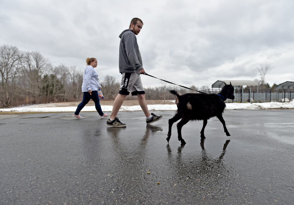 Ricky Tucker, a dog care tech at the Humane Society Waterville Area on Webb Road in Waterville, tends to a goat on Wednesday. The goat, along with 33 other animals, were surrendered by a Clinton family this week.