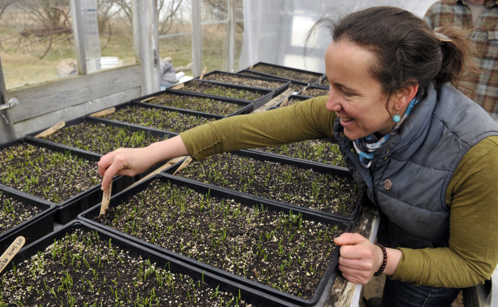 Dalziel Lewis, of Dig Deep Farm, looks over onion seedlings in a greenhouse on Friday in South China.