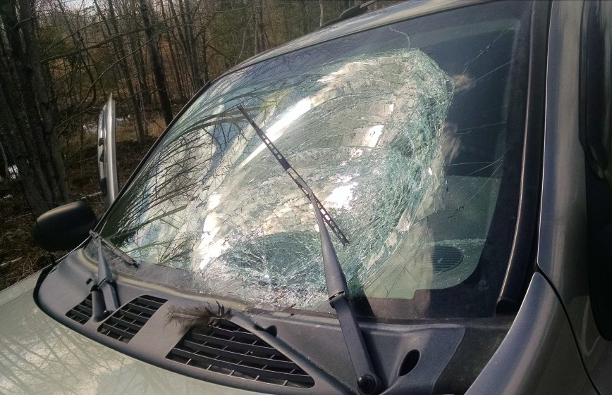 The windshield of a Chevy Trailblazer was destroyed Wednesday morning in a collision with a turkey on Interstate 95 in Pittsfield. There are usually several such accidents this time of year, when turkeys are breeding and start to spread out, a state biologist said.