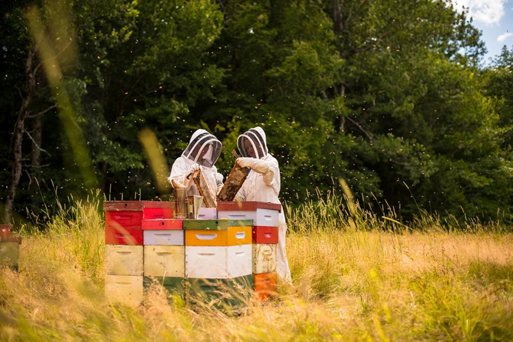 Abby Sennett, left, and Sophia Lindsay, both of Albion, check the bee hives.