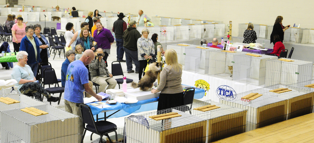 A small crowd watches as judge Christina Baumer surveys an entrant in the cat show Friday at the Augusta State Armory.