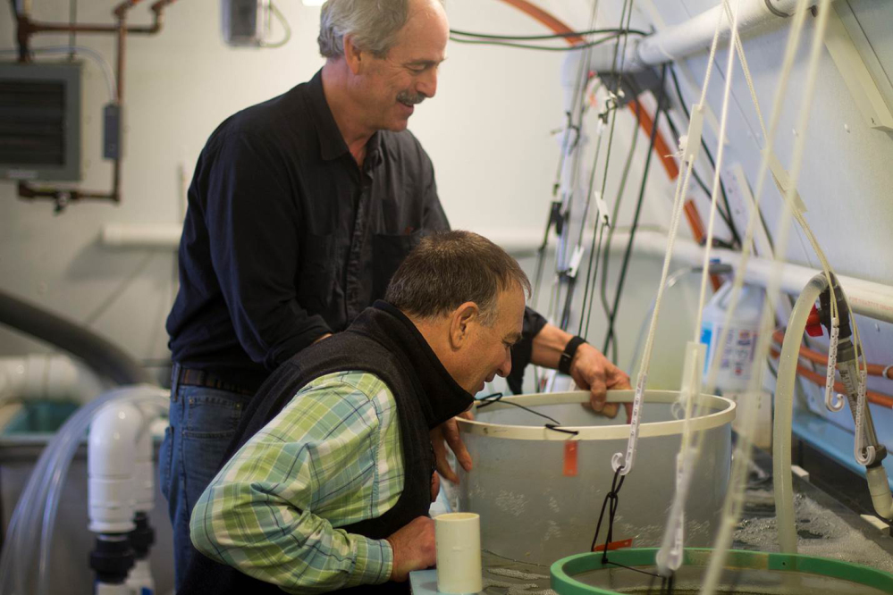 Oyster hatchery owner Bill Mook, standing, and Joe Salisbury, an associate professor of oceanography at the University of New Hampshire, view young oysters being grown at Mook Sea Farm in Walpole. Mook teamed up with researchers at the University of New Hampshire to install a monitoring system that helps him manipulate growing conditions and give his oysters a better start.