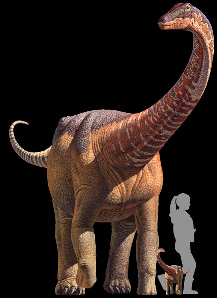 An artist's rendering puts a titanosaur in perspective.