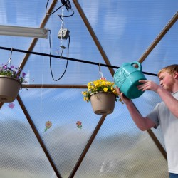 Travis Belyea, 17, waters pansies Friday inside the new geodesic dome greenhouse at the Marti Stevens Learning Center in Skowhegan.