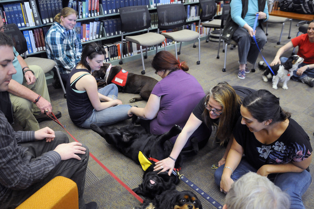 University of Maine at Augusta students Judith Rodriquez, right, and Jade Noonan pat therapy dogs Cody, right, and Peko during a visit Wednesday to the Augusta campus on finals week.