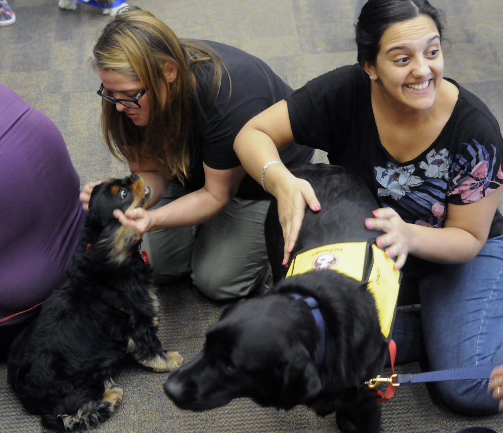 University of Maine at Augusta students Judith Rodriquez, right, and Jade Noonan pat therapy dogs Cody, right, and Peko during a visit Wednesday to the Augusta campus library during the final, stressful week of school.