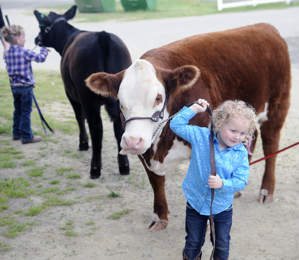 Elizabeth Wright, 3, right, of Clinton, and Lindsey McGee, 5, of West Gardiner, prepare to show their beef critters at the New England Livestock Expo in Windsor on Sunday.