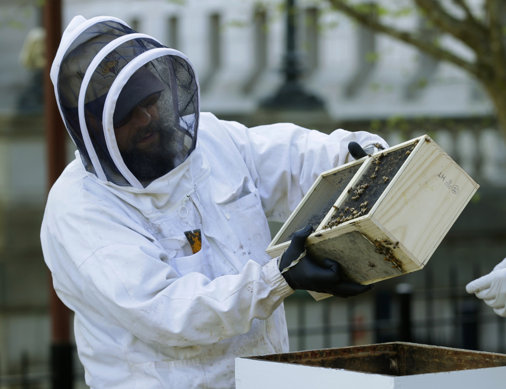 Mark Emrich, a beekeeper with the Olympia Beekeepers Association, helps transfer about 25,000 honeybees to two hives installed on the lawn of the governor's mansion last month in Olympia, Wash. America's honeybees had another tough and deadly winter.