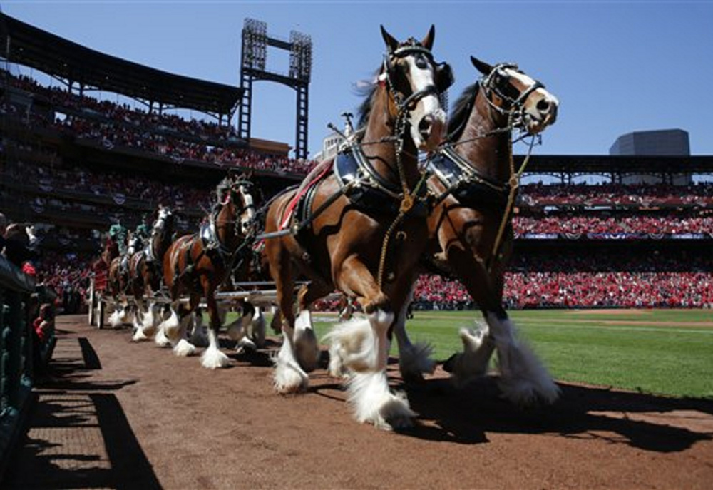 """Budweiser Clydesdales make their way around the warning track April 11 in St. Louis. Budweiser will be using lines from """"The Star Spangled Banner"""" and """"God Bless America"""" on its renamed beer this summer."""