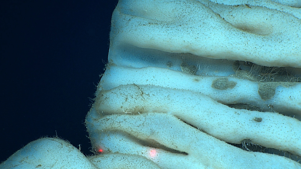 The sponge found at a depth of about 7,000 feet stunned scientists when it appeared in the remote cameras attached to their underwater rover.