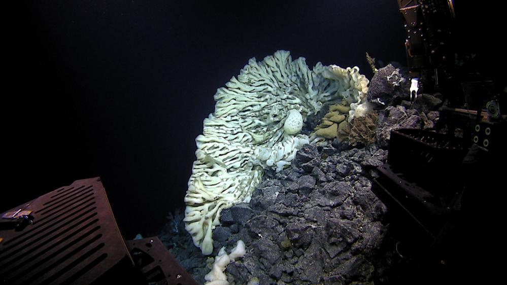 The massive sponge was photographed about 7,000 feet below the ocean surface in the Papahanaumokuakea Marine National Monument off Hawaii. Scientists on a deep-sea expedition discovered the sponge, which they say is the largest ever documented. A study published this week in the scientific journal Marine Biodiversity described the sea creature after a year of study.