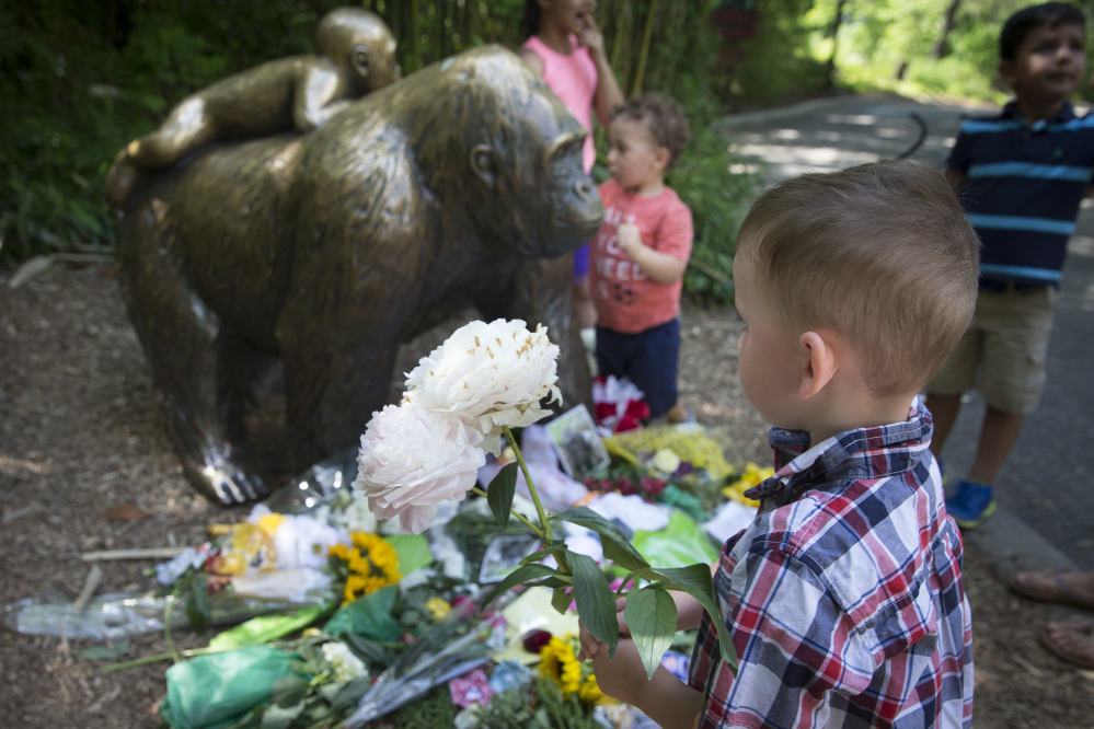 A boy brings flowers to put beside a statue of a gorilla outside the shuttered Gorilla World exhibit at the Cincinnati Zoo & Botanical Garden.