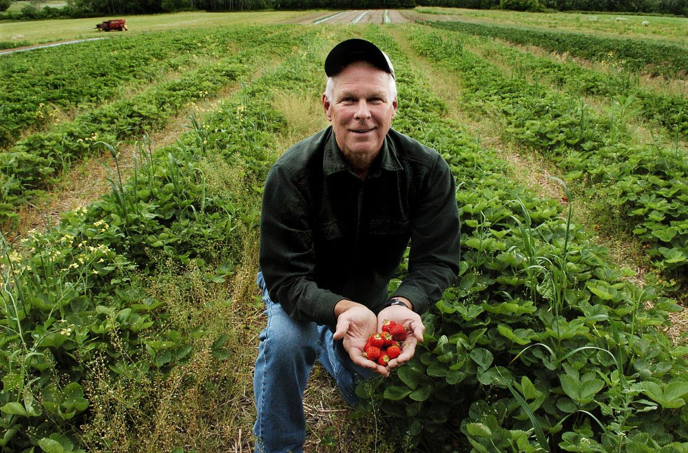 Chuck Underwood holds a handful of ripe strawberries at Underwood Strawberry farm in Benton on Monday. Underwood said the crop at his farm looks good, but is a few days late because of the recent cold weather.