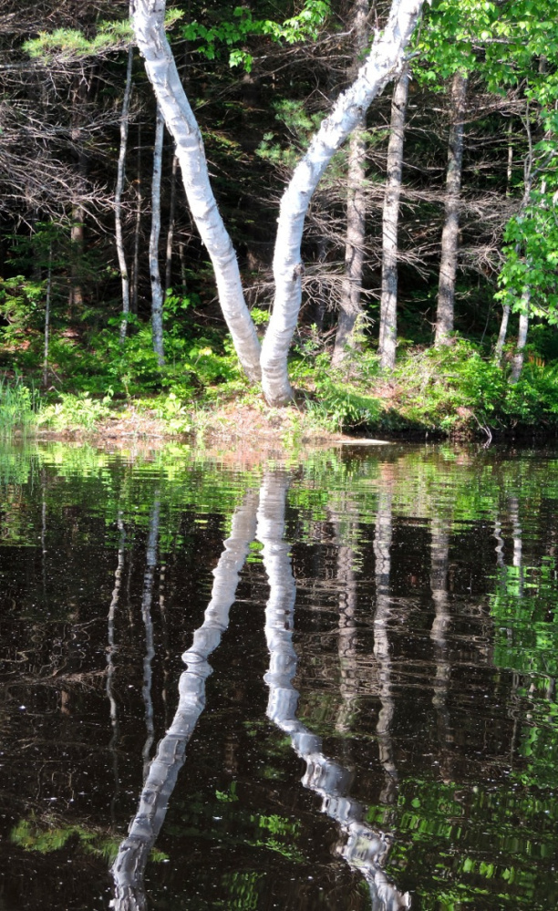 Mirror images of trees in the water are a nice reflection on all who share responsibility for a cleaner Androscoggin, including the late Sen. Edmund S. Muskie, who crafted the Clean Water Act of 1972.