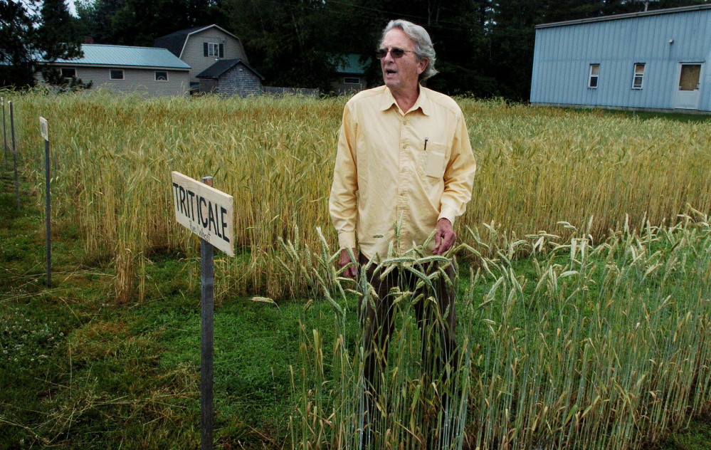Richard Roberts, of the Maine Grain Alliance, speaks between rows of varieties of heirloom wheats and grains in Skowhegan on Thursday. The alliance is testing heritage grains to see which are the best for the area for producing bread and beer.