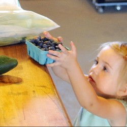 Addison Rogers, 2, of West Gardiner, collects a pint of blueberries from the stand at the Applewald Farm in Litchfield during Open Farm Day on Sunday.