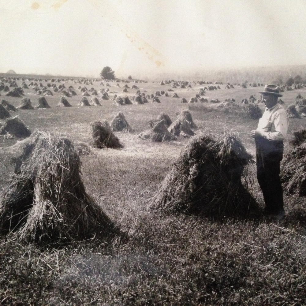 William Townsend, a great-great-grandfather of Maine Grain Alliance Executive Director Tristan Noyes, surveys his field of hand-collected bundles of grain, called stooks, in Aroostook County during the early part of the last century.