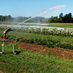 A large irrigation sprinkler waters crops growing at a research field at Johnny's Selected Seeds in Albion on Wednesday.