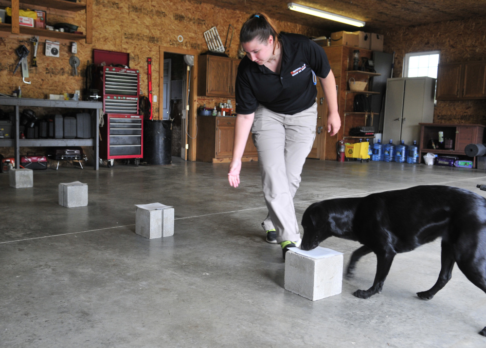 Central Maine Dog Training