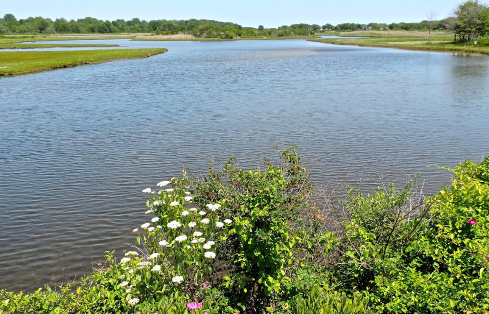 The northern marsh of the Webhannet River offers an abundance of wilderness beauty – and if you plan your journey to encompass both low and high tide, you'll get two distinct experiences.