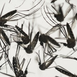 The federal agency wants blood collection to stop until donations can be tested for the Zika virus, expected to begin Friday.