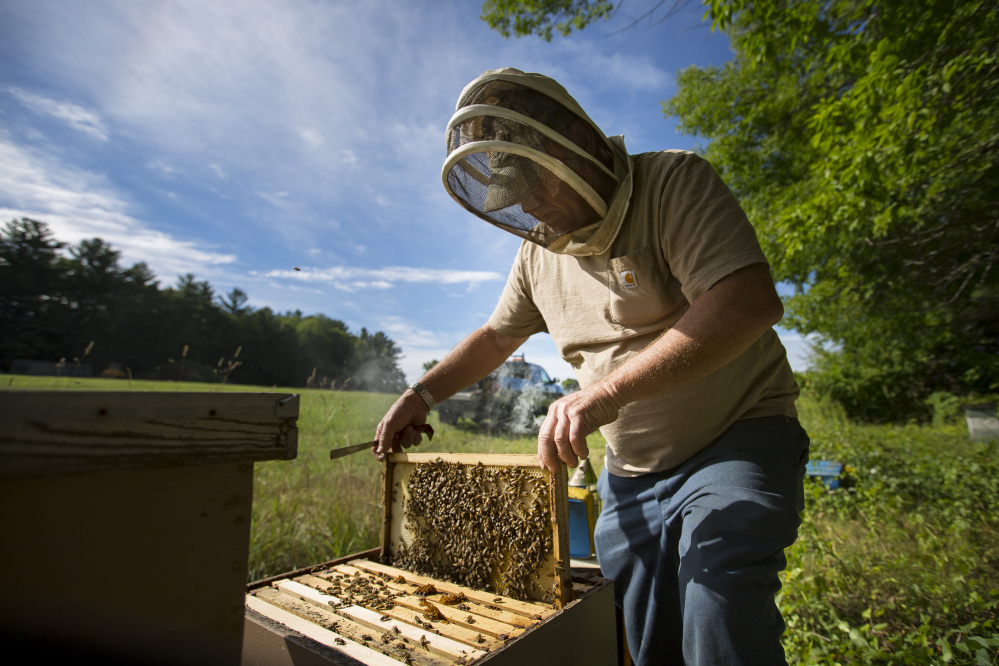 Bee farmer Tony Bachelder, of Tony's Honey & Pollination Service, tends to his hives.