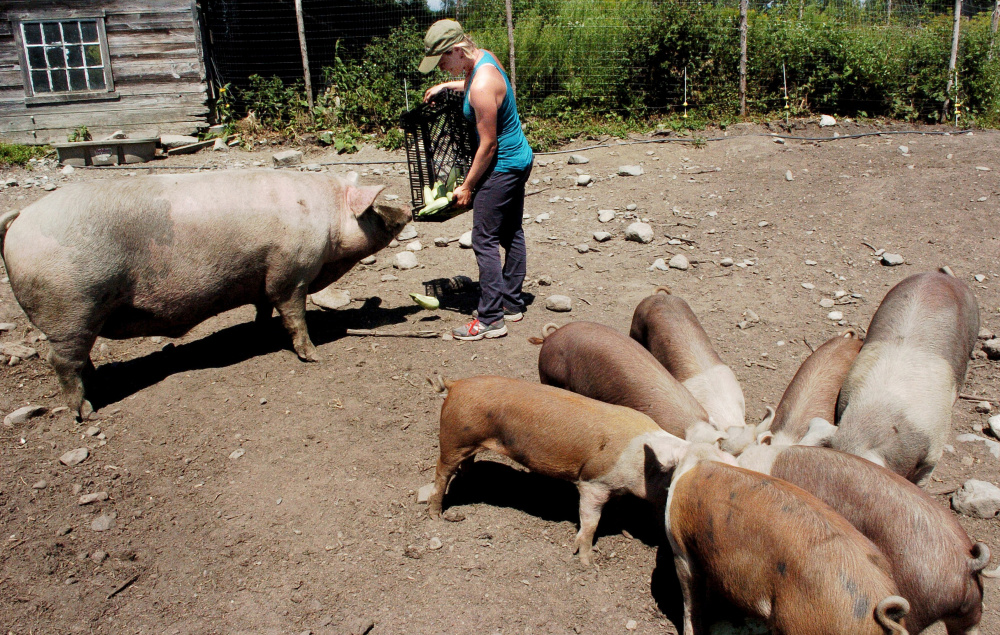Staff photo by David Leaming Farmer Johanna Burdet feeds Fat Man the pig and piglets at Moodytown Gardens farm in Palmyra last month.
