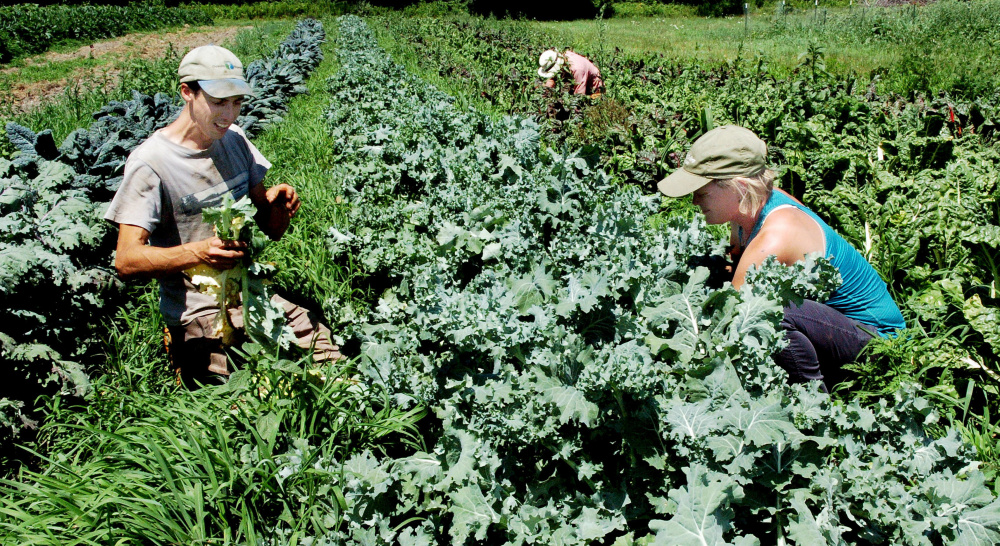 Farmers Jarret Haiss and Johanna Burdet work in one of their market gardens at their Moodytown Gardens farm in Palmyra last week. The young couple is making a go of farming without having to work at outside jobs.