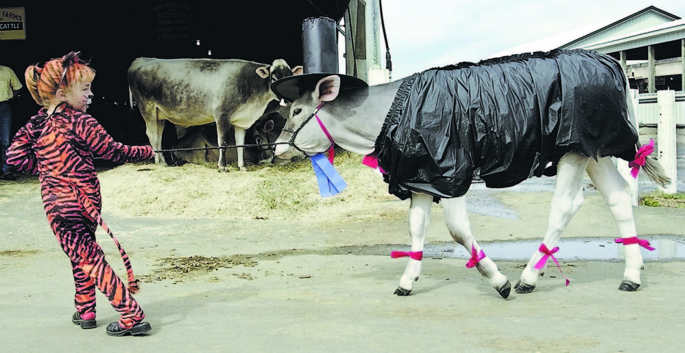 Kristen Davis. at the age of 5, leads a calf adorned in a costume down the fairway in 2003 during the costume parade at the Windsor Fair. Davis has been going to fairs as a member of 4-H since she was young and is attending Husson College beginning later this month, with the intention of becoming an advocate for farming after she graduates.
