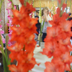 People examine exhibitors on Sunday during the gladiolus show on the first day of the Windsor Fair.