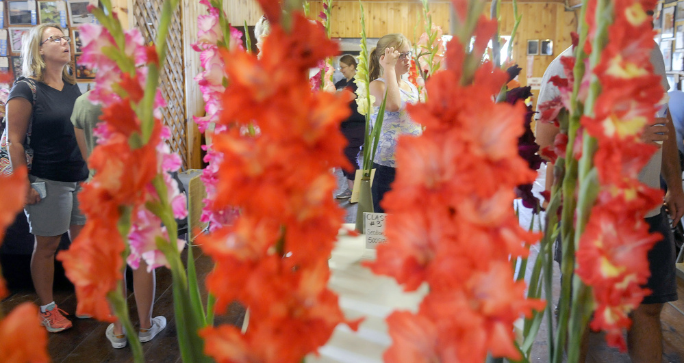 People examine exhibitors Sunday during the gladiolus show on the first day of the Windsor Fair.