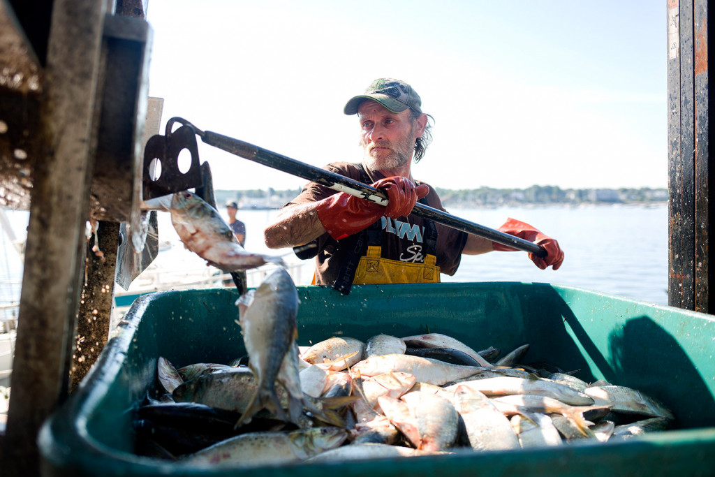 John Norwood works to unload pogies Friday at Coastal Bait on the Portland waterfront.